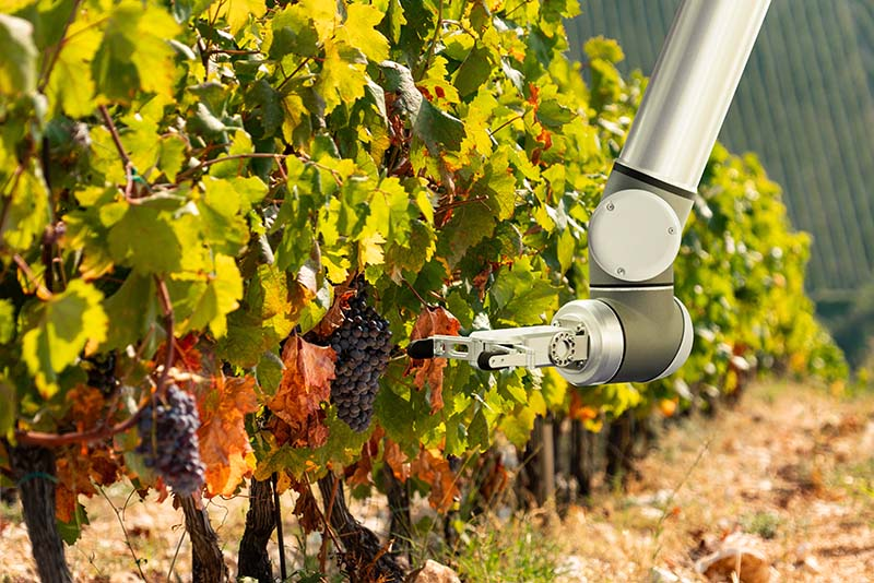How Technology is Helping Vineyards Crop Up in New Areas