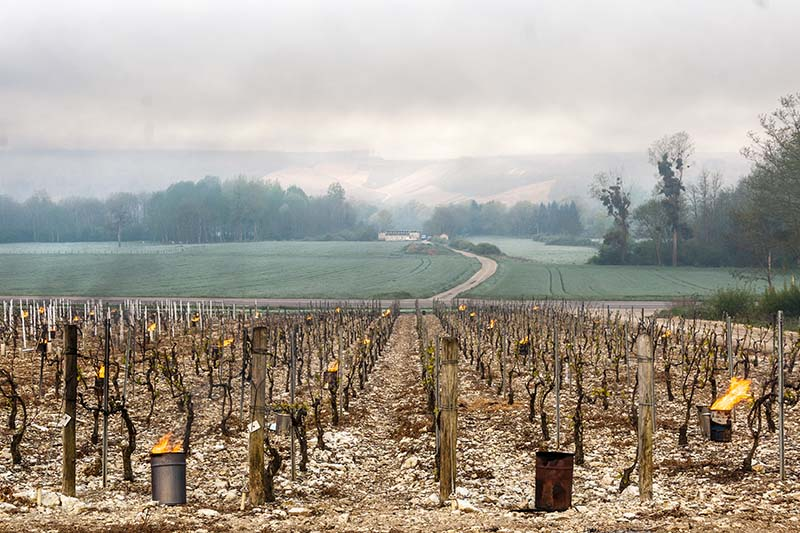 The Effects of the West Coast's Wildfires on the Wine Industry