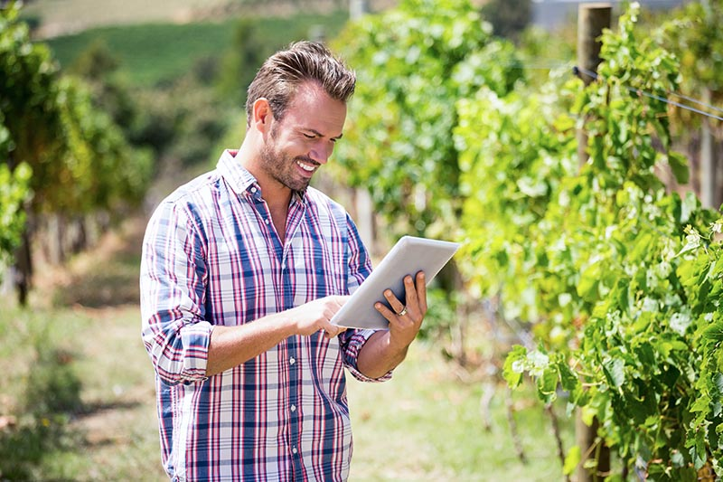 5 Ways Data Analytics is Transforming the Winegrowing Industry