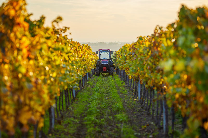 How Winegrowers are Responding to Climate Change